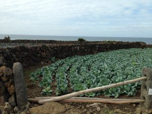 Cabbages and sea