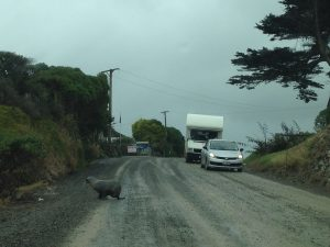 Seal on the road!