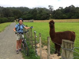 Friendly alpaca!