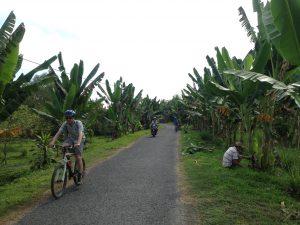 Banana trees on both sides!