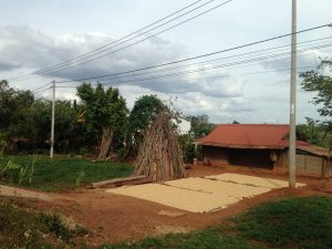 A house and drying crops