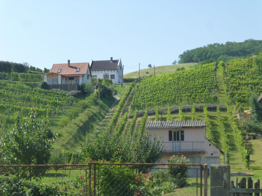 Vineyards around Tokaj